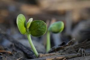 groei2
